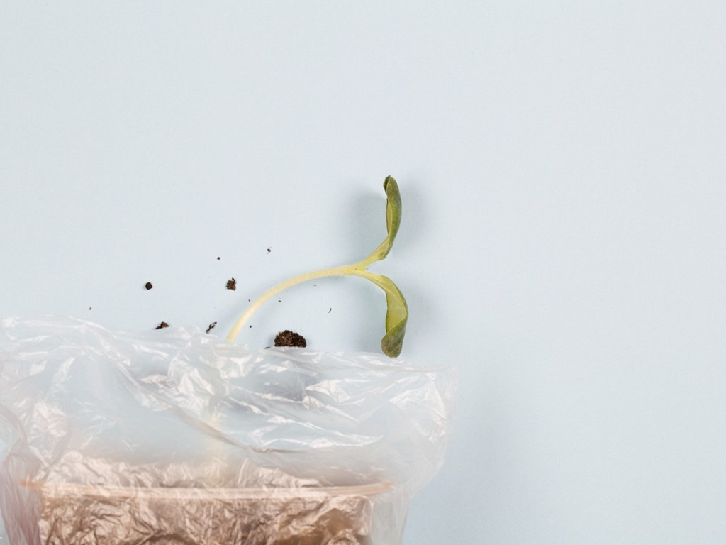 germinate seeds in a bag